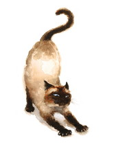 Watercolor Siamese Cat Stretching Hand Drawn Sketch Pet Portrait Illustration Isolated On White Background