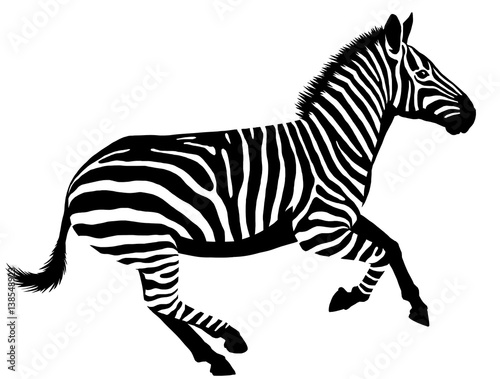 black and white linear paint draw zebra illustration - 138548923