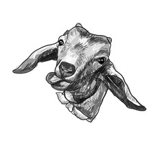 Drawing Goat Head Sticking Ton...