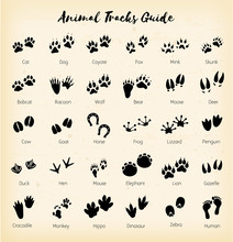 Animal Tracks - Foot Print Gui...