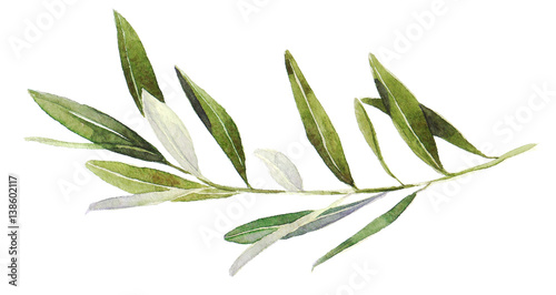 Watercolor olive branch on white background Fototapete