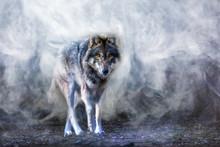 Ein Wolf Erscheint Aus Dichtem...
