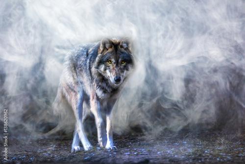Keuken foto achterwand Wolf ein Wolf erscheint aus dichtem Nebel