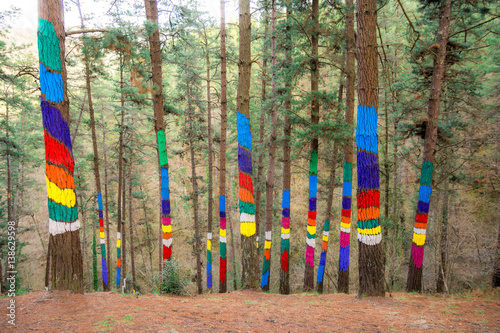 painted forest of oma at urdaibai biosphere, Spain Poster