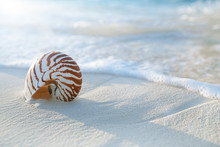 Nautilus Shell  On Golden Beach