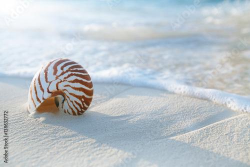 Wallpaper Mural nautilus shell  on golden beach