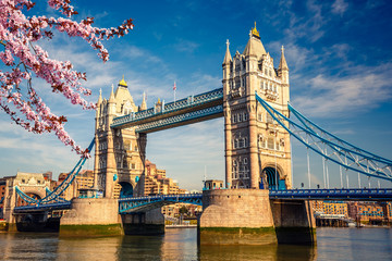 Fototapeta Londyn Tower bridge with cherry blossom, London