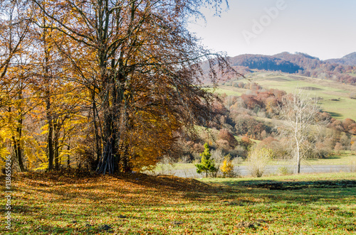 Fototapety, obrazy: Autumn landscape, trees with colorful leaves, frost on green grass, autumn mountain in fog in the background.