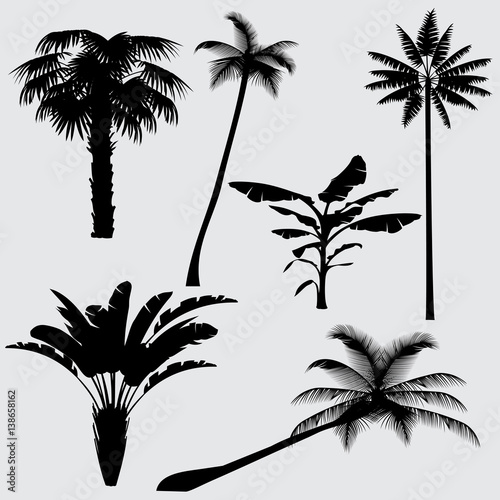 Tropical palm tree vector silhouettes isolated on white background Wall mural