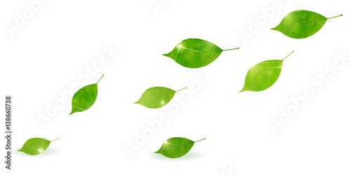 新緑 葉 緑 背景 Canvas