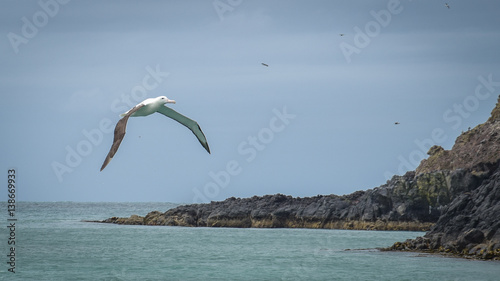 Fotomural  Albatros in Neuseeland Dunedin
