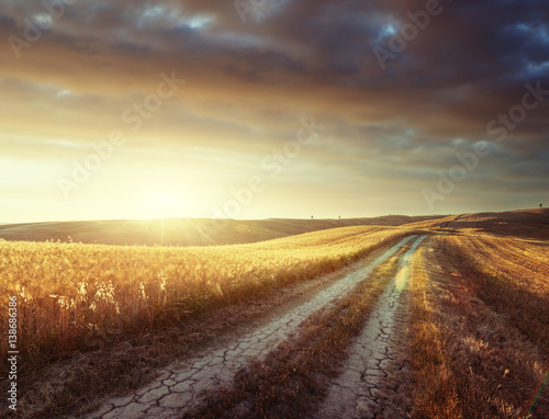 Garden Poster Brown Tuscany sunny road, Italy