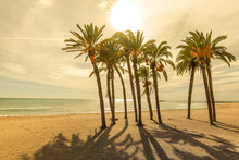 Palms On The Beach With Sun Li...