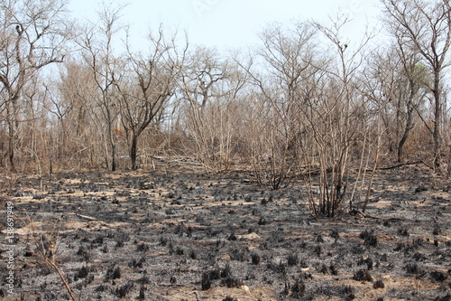 Valokuva  Walbrand in Südafrika