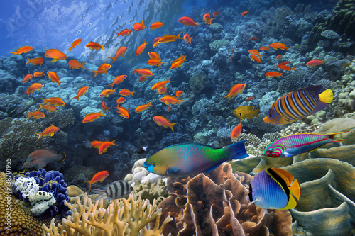 Poster Coral reefs Photo of a tropical Fish on a coral reef