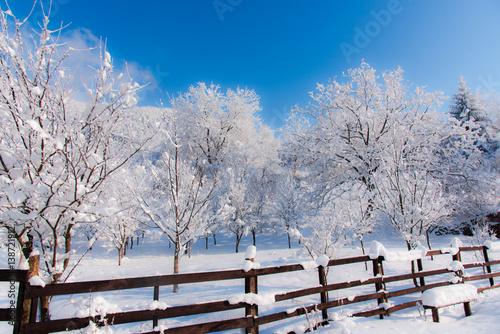 Fototapety, obrazy: Fresh snow covered trees