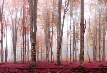 FototapetaRed Forest