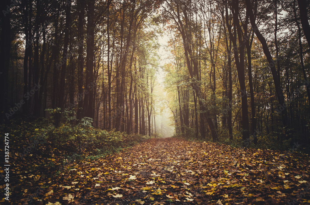Valokuva Path through forest in autumn with colorful leaves on the ground, ground level p