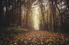 Path Through Forest In Autumn ...