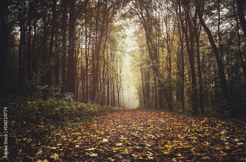 Photo  Path through forest in autumn with colorful leaves on the ground, ground level p
