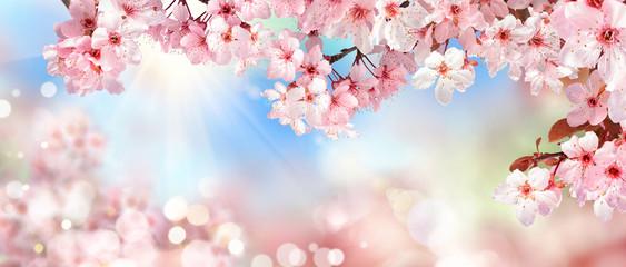 Panel SzklanyNatur Szenerie im Frühling: Kirschblüte, Bokeh Hintergrund und Sonne