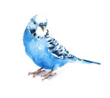 Watercolor Bird Blue Budgeriga...