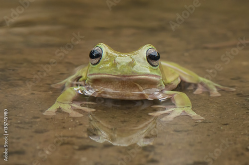 Tuinposter Kikker frog in the water