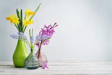 Spring Flowers  Daffodils, Hyacinth And Muscari