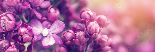 Foto op Canvas Lavendel Lilac flowers background