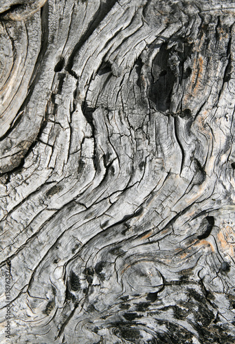 Fotografie, Obraz  cracked twisted wood