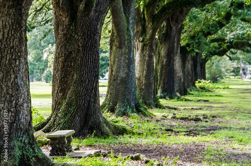 Rows of old southern oak trees with bench in New Orleans park © Andriy Blokhin