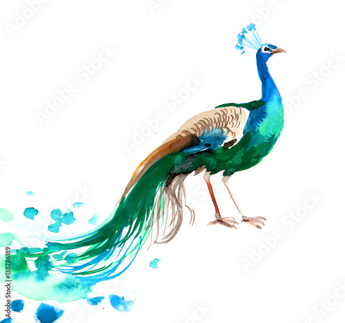 Watercolor sketch of a peacock Wall mural