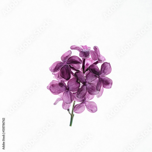 Spoed Foto op Canvas Lilac lilac flowers isolated