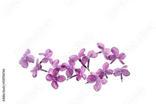 Recess Fitting Lilac lilac flowers isolated