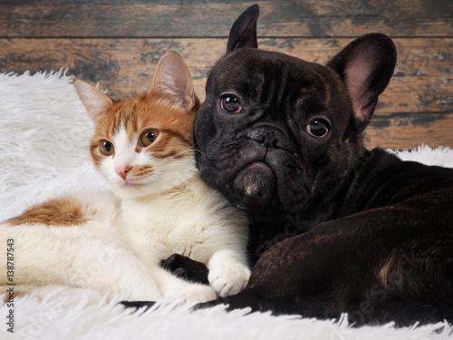Keuken foto achterwand Kat cat and dog together. Cute Pets. Portrait