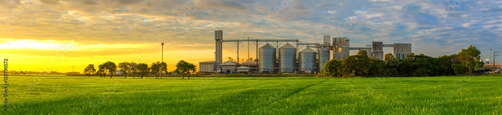 Fototapeta Agricultural Silos - Building Exterior, Storage and drying of grains, wheat, corn, soy, sunflower against the blue sky with rice fields.