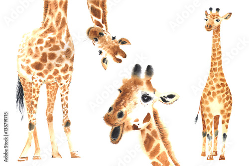 Fotografie, Obraz  Set of watercolor giraffes