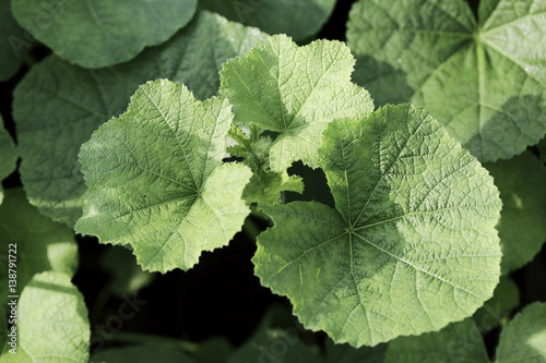 Fotografia, Obraz  closeup fresh green plants  abstract background