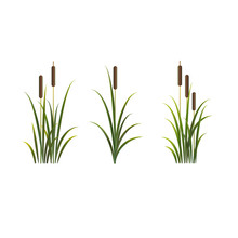 Reeds Vector Isolated Set. Rus...