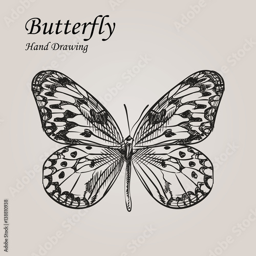 Fotobehang Vlinders in Grunge Hand drawn sketch style Butterfly. Retro hand-drawn vector illustration. Great for poster, banner, voucher, coupon.