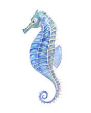Watercolor Seahorse, Aquarelle...