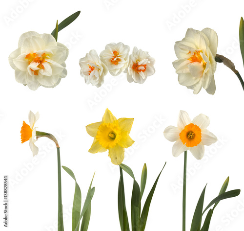 Papiers peints Narcisse Set of beautiful white and yellow daffodils