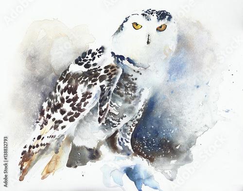 Canvas Prints Owls cartoon Snowy owl watercolor painting