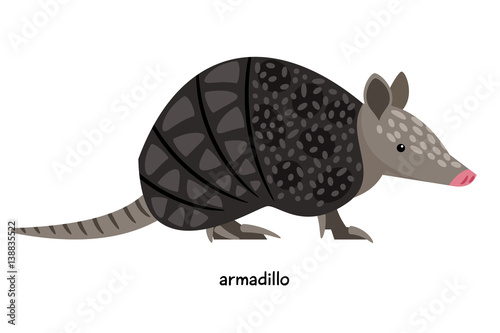 Armadillo - unique animal in the shell Wallpaper Mural
