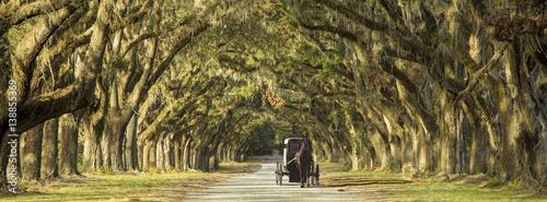 Fototapeta Horse drawn carriage on plantation obraz
