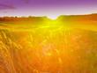 Stimmungsvolle Wiese im Sonnenuntergang mit Lensflares und bewegtem Unschärfebereich