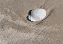 A Shell Washed Up On Shore At ...