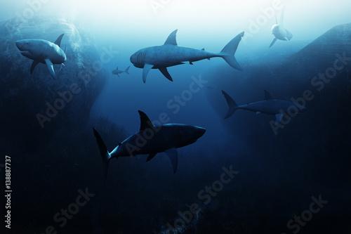 Shark encounter,Large school of sharks patrolling underwater Wallpaper Mural