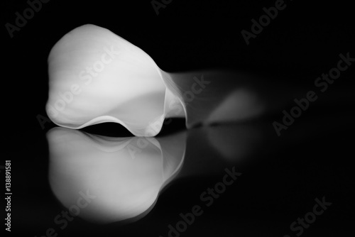 Fototapeta Lilia Calla i odbicie w czerni i bieli.