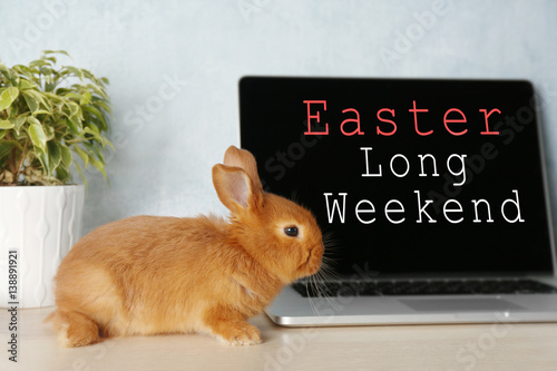 Fotografía  Cute red bunny sitting near laptop